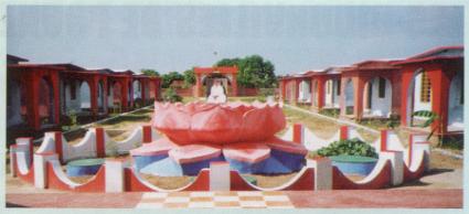 Amma Modestie lotus